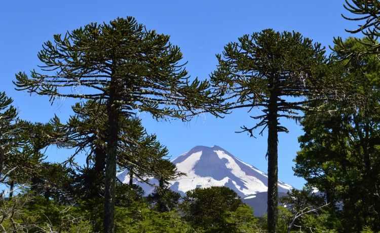 Patagonien - Vulkan Villarica