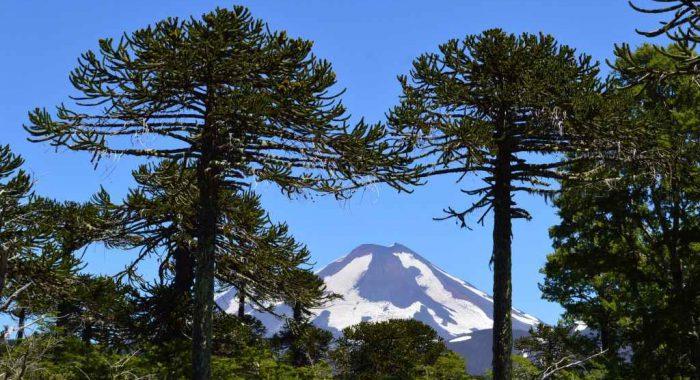 Patagonien & Chile, Dezember 2015