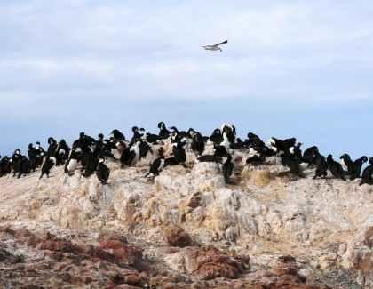 Misiones und Patagonien, November 2014