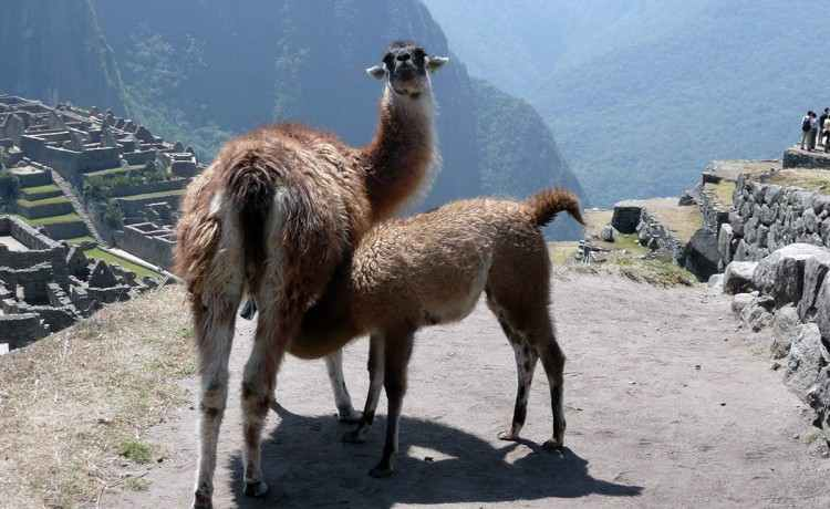 Argentinien Reise: Peru: Macchu Picchu 7